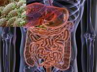 Второй мозг человека — кишечник (Из книг В.А. Шемшука)