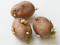 Проросшая картошка от воспаления суставов