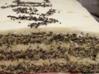Нежный, воздушный и тающий во рту маковый торт