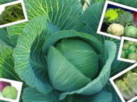 Спасение капусты от вредителей