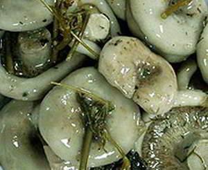 рецепт Грузди соленые по-алтайски