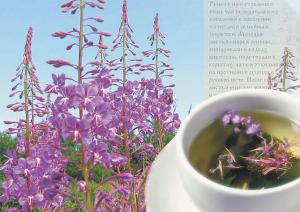 Как правильно приготовить и заварить Иван-Чай