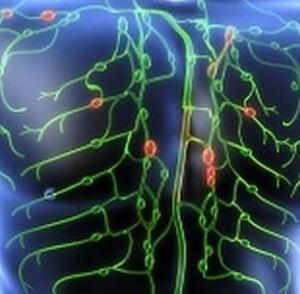 О лимфатической системе