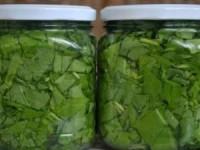 Заготовка из щавеля с растительным маслом для зеленых щей на зиму